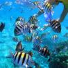 Snorkel - Snorkeling - Parque Tayrona